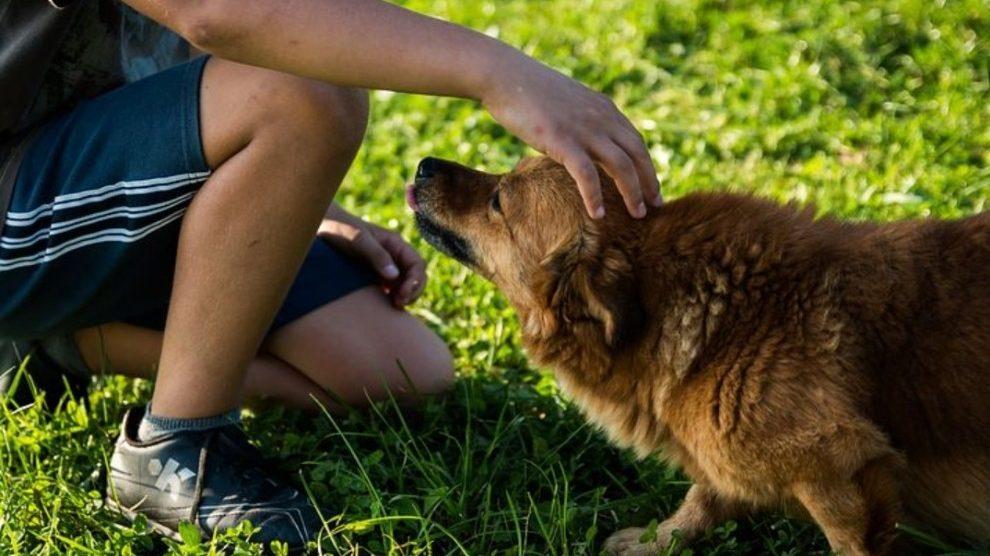 I cani capiscono cosa pensiamo e sentiamo: lo studio sull'evoluzione dei nostri amici a quattro zampe