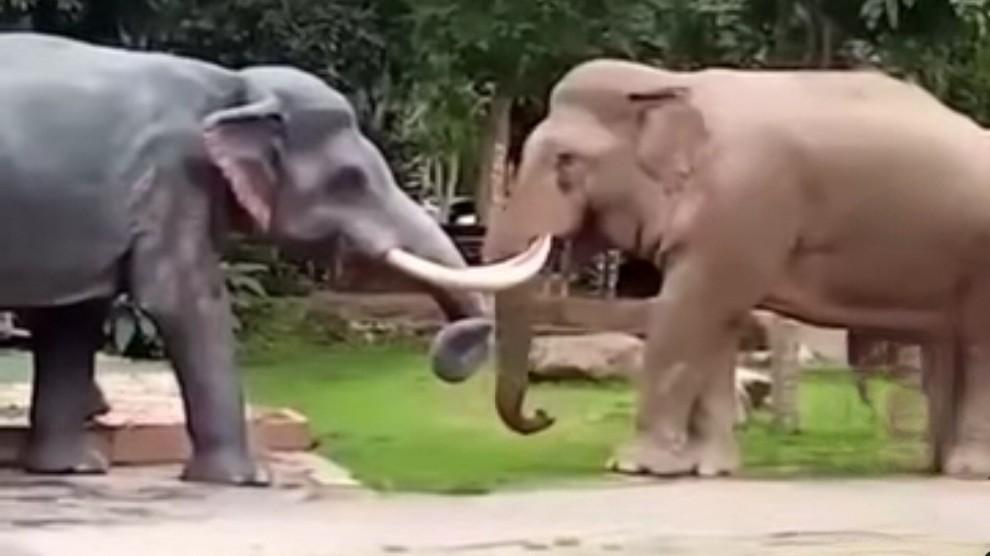 Scambia statua per rivale in amore: elefante infuriato fa una strage – VIDEO