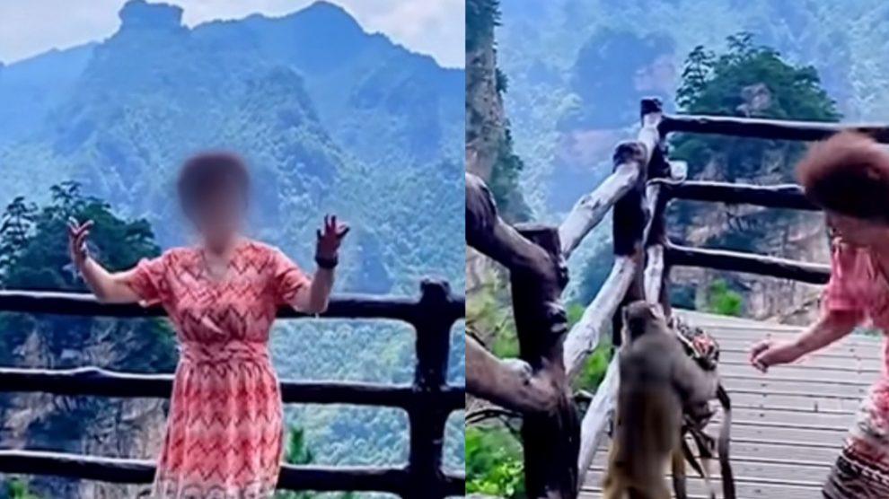 Si riprende mentre balla nel Parco: scimmia scippa la borsa e scappa – VIDEO