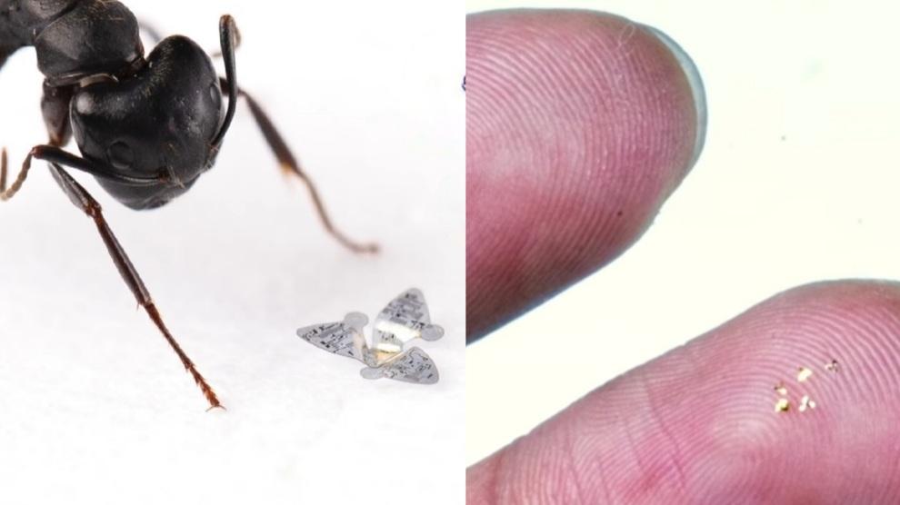 Creato l'oggetto volante più piccolo al mondo: il microchip sensore – VIDEO